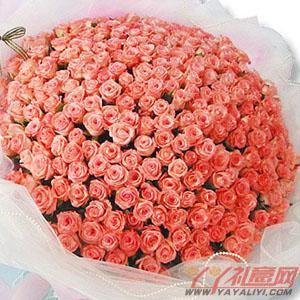 鲜花365朵粉玫瑰在线预...