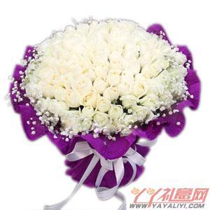 99枝精品白玫生日鲜花