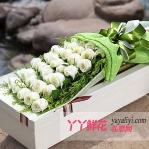 飘雪-送花33朵白玫瑰方形礼盒