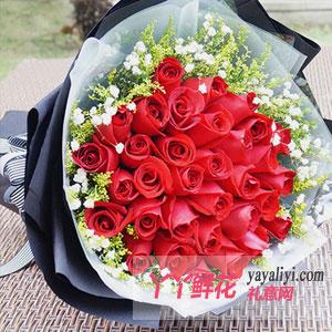 拥抱幸福-送老婆33枝红玫瑰