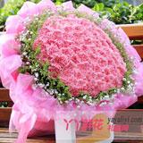 99朵粉色康乃馨鲜花预定【热销】
