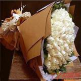 66枝白玫瑰鲜花订购