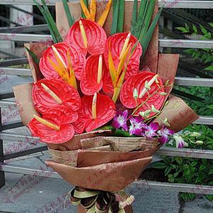 8支红掌鲜花预订