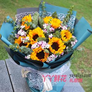 鲜花8朵向日葵相思梅款