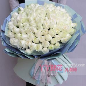 99朵白玫瑰鮮花速遞