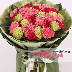 母亲节33朵优质康乃馨