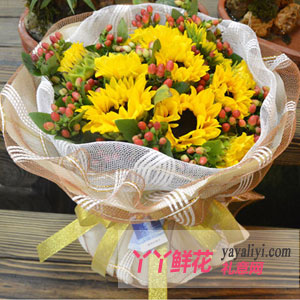 就要你快樂-11枝向日葵網上訂花