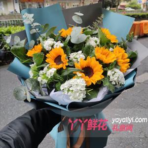 畢業送7朵向日葵尤加利葉白色相思梅