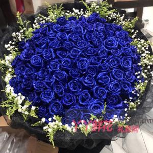 99朵藍色妖姬搭配黃鶯滿天星
