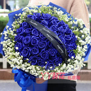 滿滿的愛-33朵藍色妖姬配黃鶯滿天星