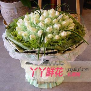 玫瑰花訂購66枝白玫瑰