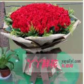 玫瑰花訂購99枝紅玫瑰