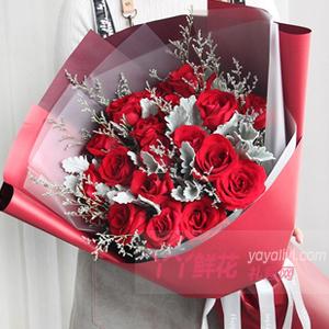 19朵紅玫瑰銀葉菊間插情人草點綴