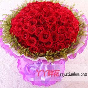 99朵紅玫瑰網絡情人節鮮...