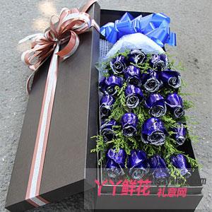 匆匆那年-19朵蓝色妖姬玫瑰