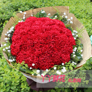 天天开心 - 33朵红色康乃馨