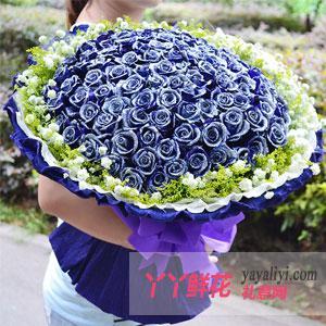 99朵藍玫瑰情人節送花