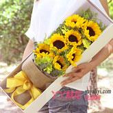 7朵向日葵礼盒