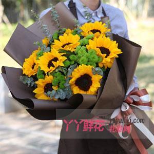 9朵向日葵搭配绿色小雏菊...