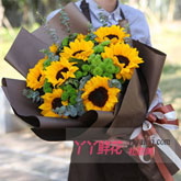 9朵向日葵搭配綠色小雛菊尤加利