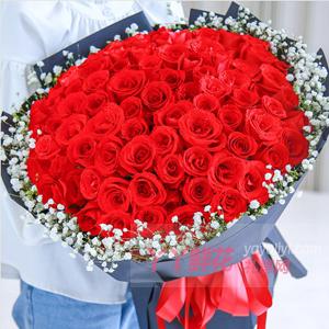 守护幸福-99朵卡罗拉红玫瑰外围满天星点缀